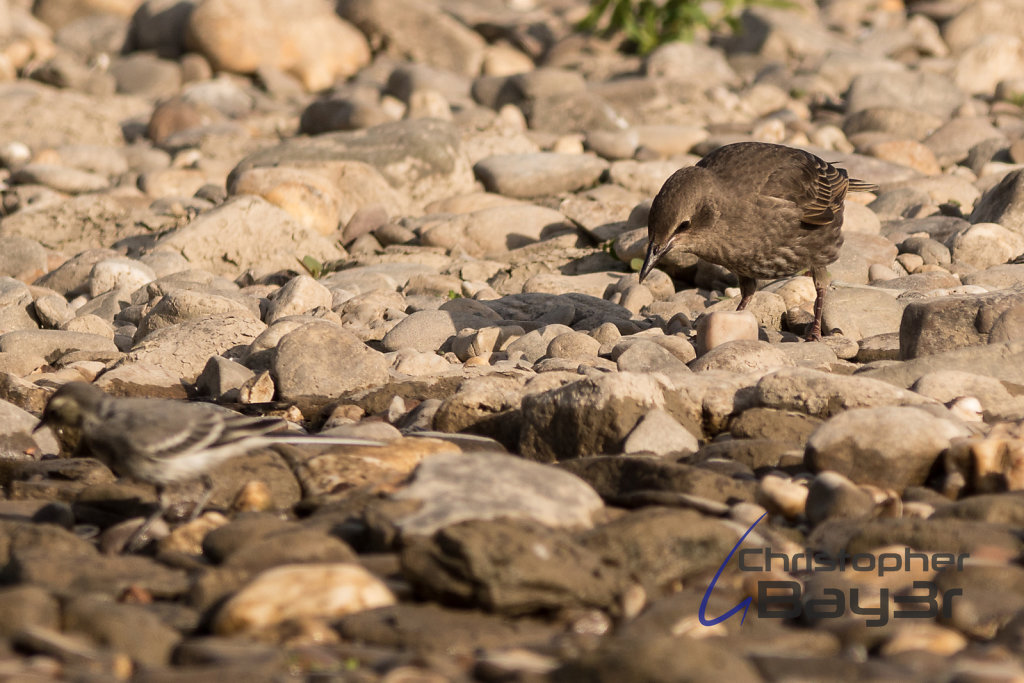Zwei Vögel suchen Futter II